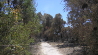 the path which acted as a firebreak. Further on the path was not wide enough and the fire jumped across