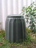 compost bin in my garden. The poinsettia next to it grew from cuttings put in the compost
