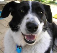 Sheeba the smiley dog