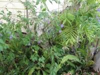 ferns and palms in my garden
