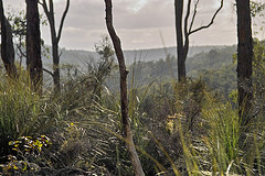 understorey of jarrah forest near Mungalup, south west of Collie by Andy Graham