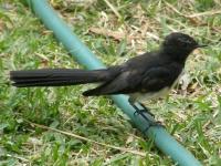 jiri jiri in my garden