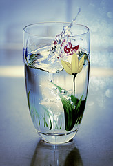 glass of water by Bergius on Flickr