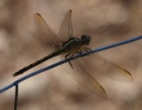 dragonfly on the fence