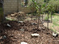 garden bed after pine bark was spread