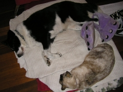 Sheeba keeping warm in her slippers and Ayesha snuggling as close as Sheeb would allow
