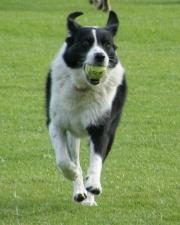 Sheeba's fav things: tennis balls and parks