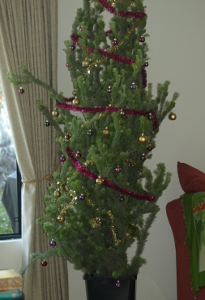 woolly bushes make great Christmas trees