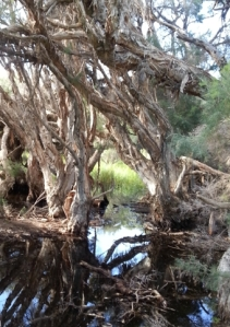 frog habitat at the swamp