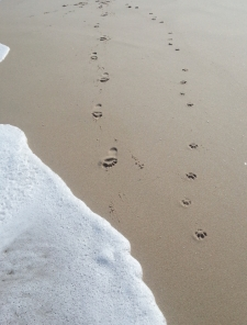leave only footprints at the beach