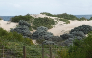 sand dunes are fenced to stop beach goers trampling plants