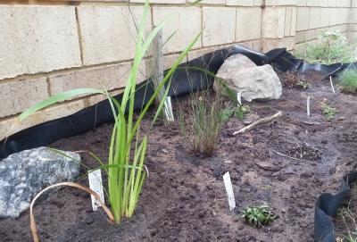 the bog garden after planting
