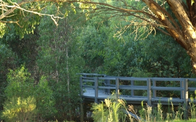 the boardwalk at Lake Gwelup wends through Eucalyptus rudis