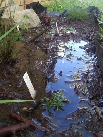 the bog garden was too effective