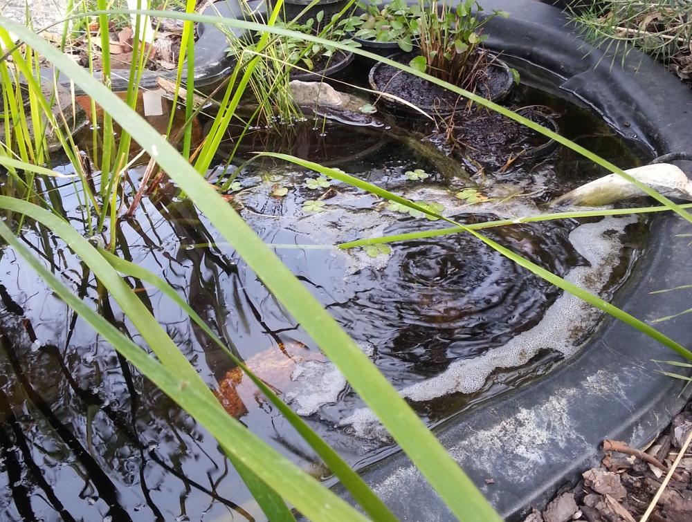 Bog garden alterations ockham 39 s razor for Winter pond plants