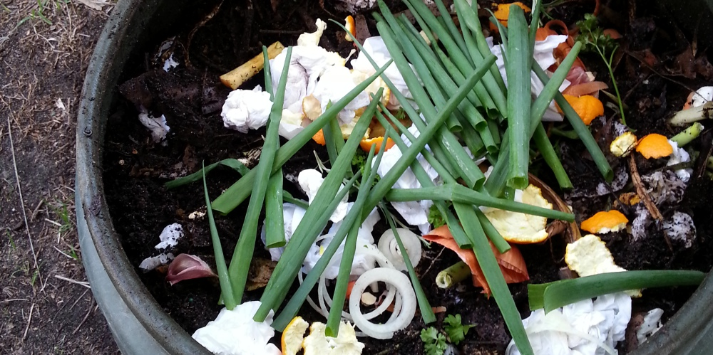 kitchen scraps in the compost bin