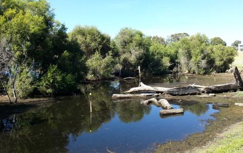 receding waters at the paperbark November 2015
