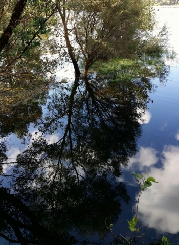 reflection of flooded gum