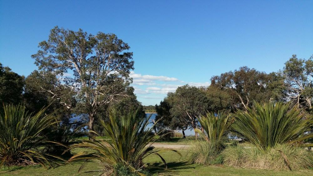 zamia at Lake Gwelup